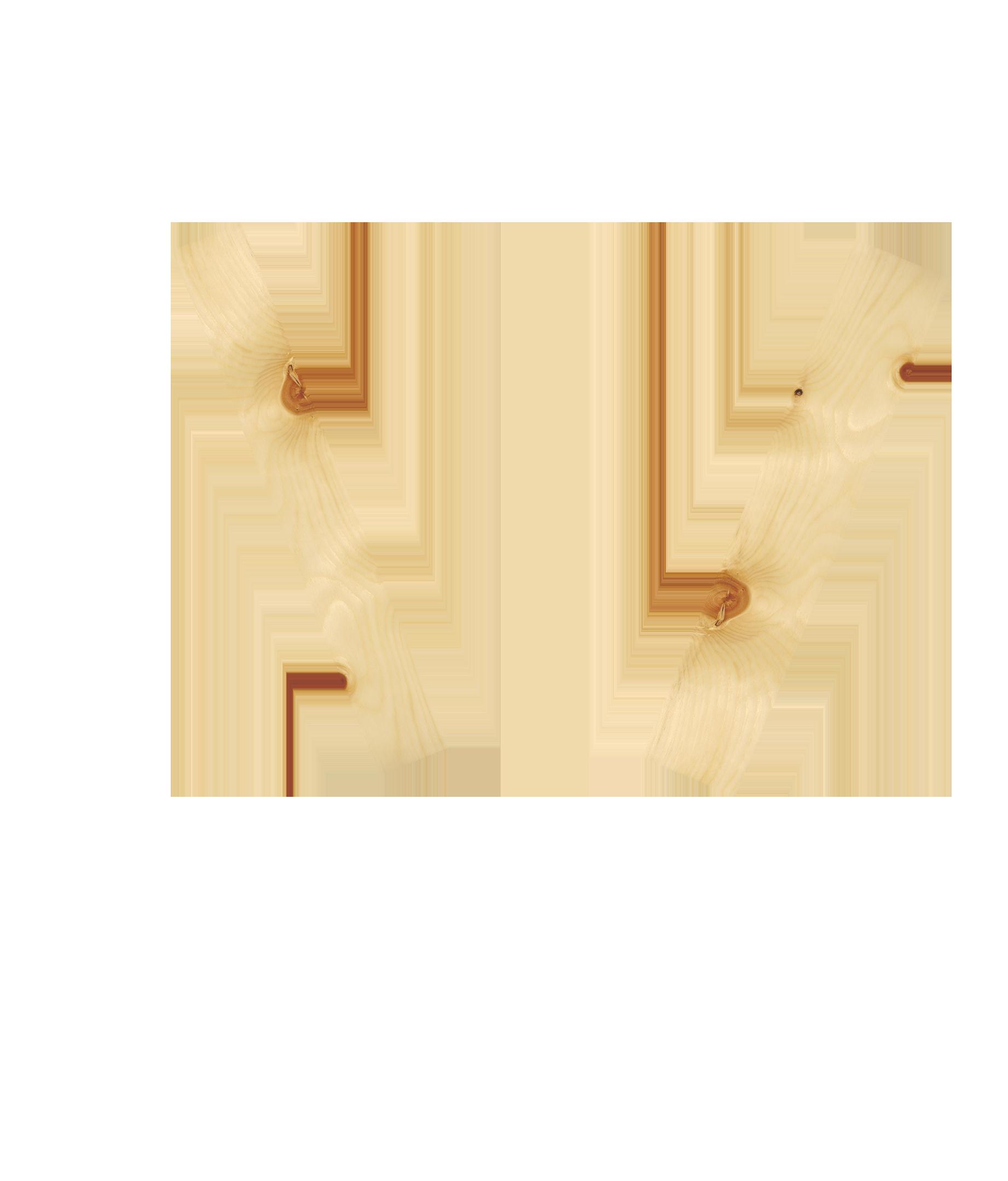 Zirbe